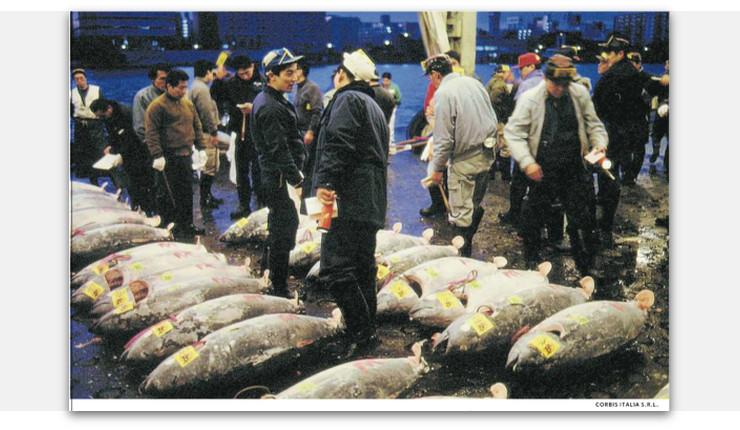 mercato_pesce_tokyo.jpg