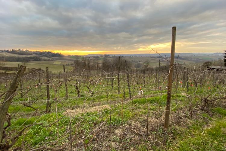 case-corini-vigne-tramonto.png