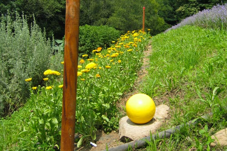 fiori-gialli-ok.jpg