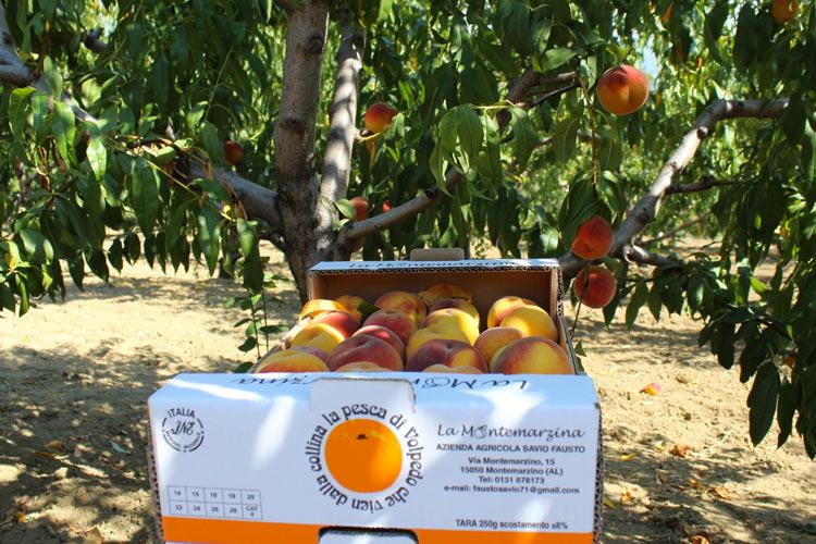 Frutteto.jpg