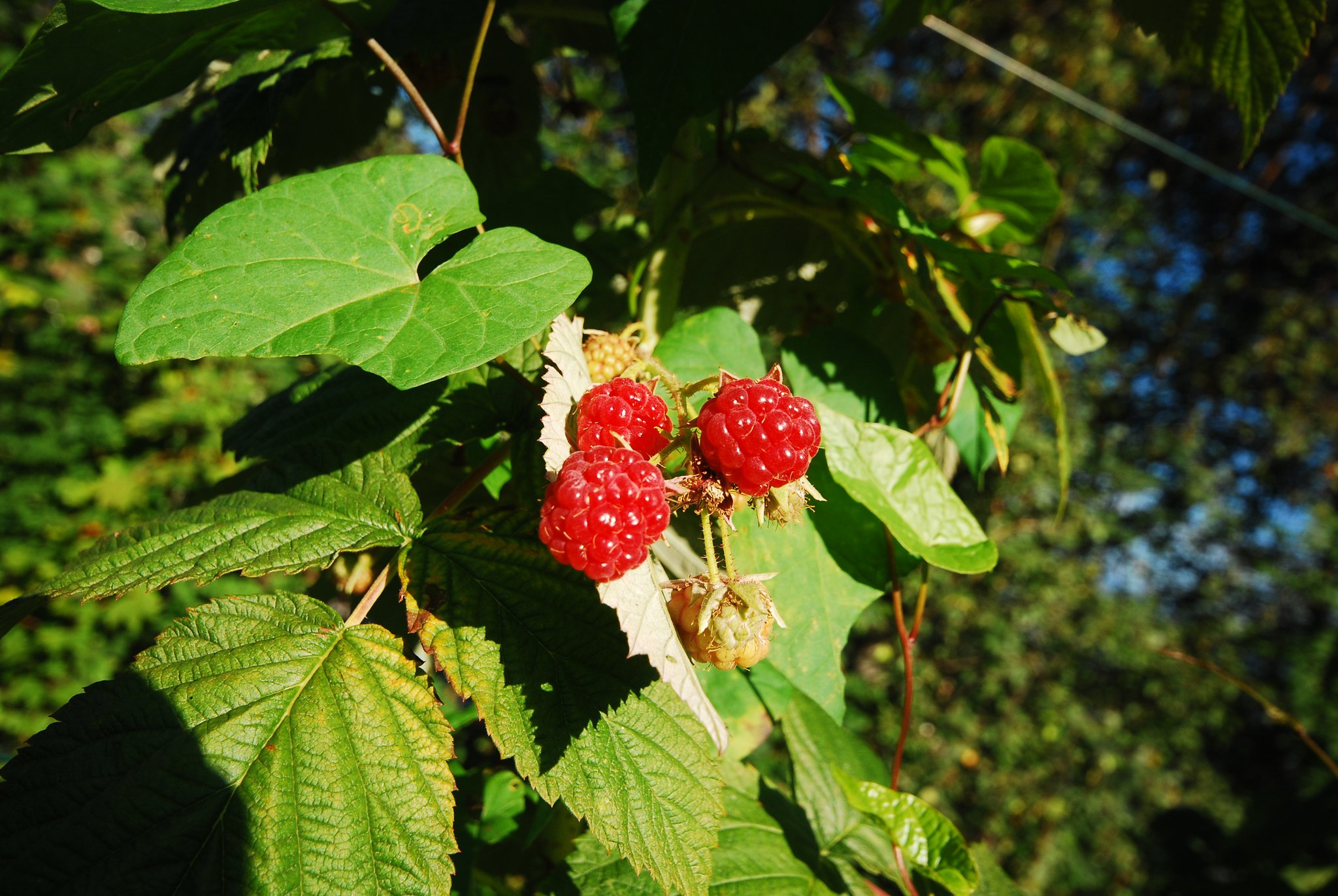 frutti-bosco.jpg
